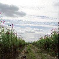 「We Hum On The Way Home | Motohiro Nakashima」